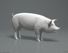 Pig - Highpoly Sculpture 3D model