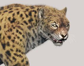 Leopard 3D animated hunt