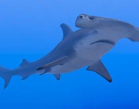 Hammerhead Shark 3D model animated underwater