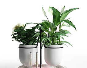 3D Peace Lily with Camellia