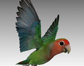Lovebird Animated 3D model