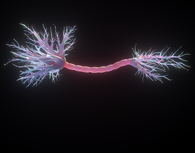 Neuron Human anatomy neuron 3D model