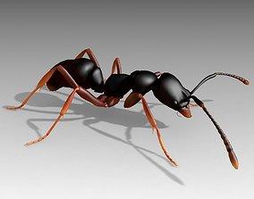 3D asset Asian needle ant