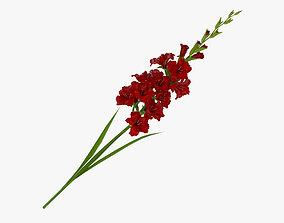 Gladiolus Red 3D model