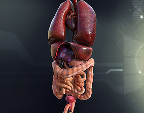 large Human Male Internal Organs 3D model