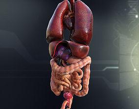 large Human Male Internal Organs 3D model