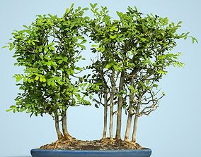 3D model Miniature Bonsai Forest
