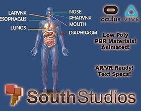 Animated Human Body Respiratory System AR VR animated 1