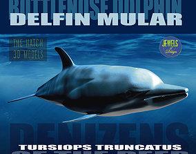 Bottlenose Dolphin 3D model