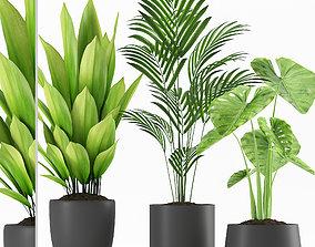 Plants 234 3D model