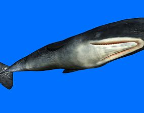 Sperm Whale 3D asset animated