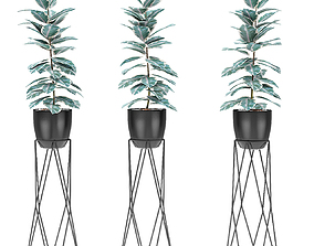 potted Plant in Pot Flowerpot Exotic Plant 3D