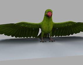 Green Parrot 3D model