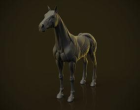 3D print model Horse Ecorche