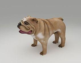 English Bulldog 3D Print Model