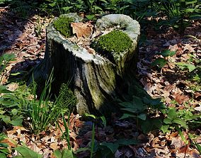 3D asset Photoscanned mossy tree stump