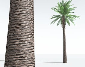 3D asset EVERYPlant Date Palm LowPoly 01 --10 Models--