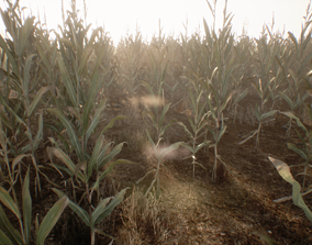 Realistic Optimized Corn 3D asset