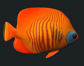 Gold Cheek Butterfly fish A 3D asset