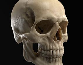 PBR 3D Realistic Human Skull model