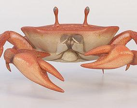 crab crustaceans animal 3D model