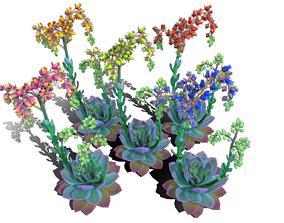 Flower Echeveria 3D asset
