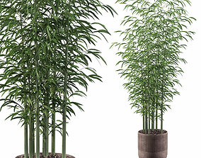 3D model Plants collection 082 - bamboo