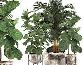 3D model Decorative plants in flower 5