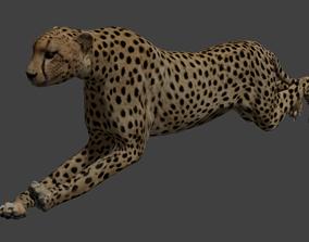 Cheetah 3D asset
