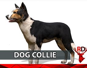 3D asset Dog COLLIE