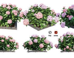 3D Plants Hydrangea set 13