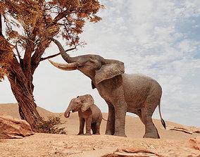 3D asset African Elephants