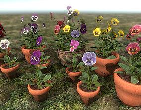 Viola Pansies 3D asset