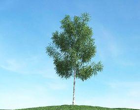 Tree In Spring 3D model