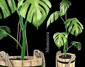 earth 3D Monstera plant
