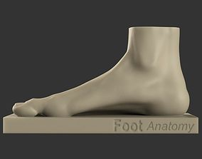Foot reference 3D print model