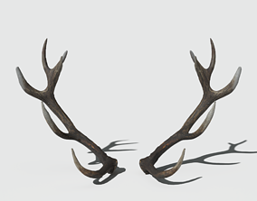 Reed Deer Antlers Scan 3D model