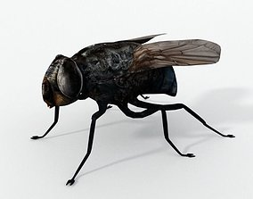 3D asset Fly Insect