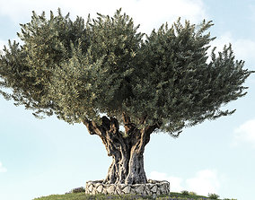 Olive Tree 05 3D model
