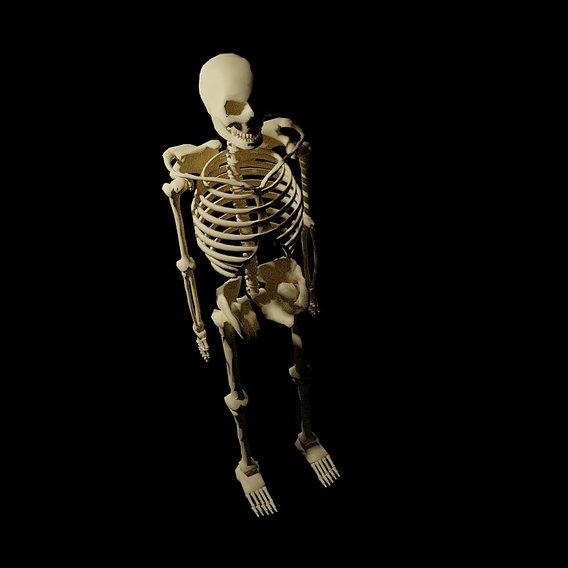 The Bones in The Dark