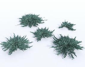3D model creeping juniper blue chip set