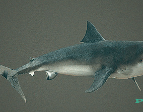 animated sharks 3D model