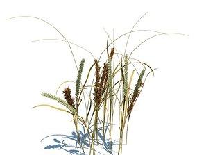 3D model Grass Plant