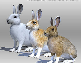 3D model Rabbit or Hair