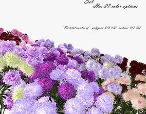 Flowers aster 3D model plant