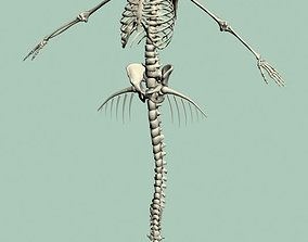 Mermaid skeleton 3D model
