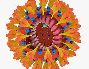 coronavirus Coronavirus 3D model