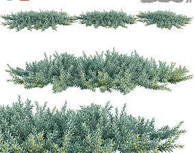 3D model Acacia redolens Desert Carpet Spreading Acacia 3