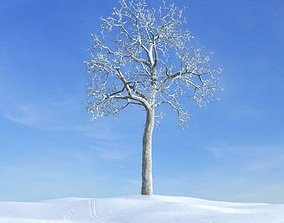 Winter Bare Tree 3D