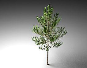 3D model light tree
